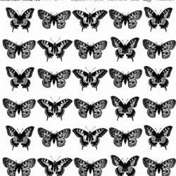Butterflies Acetate 12×12